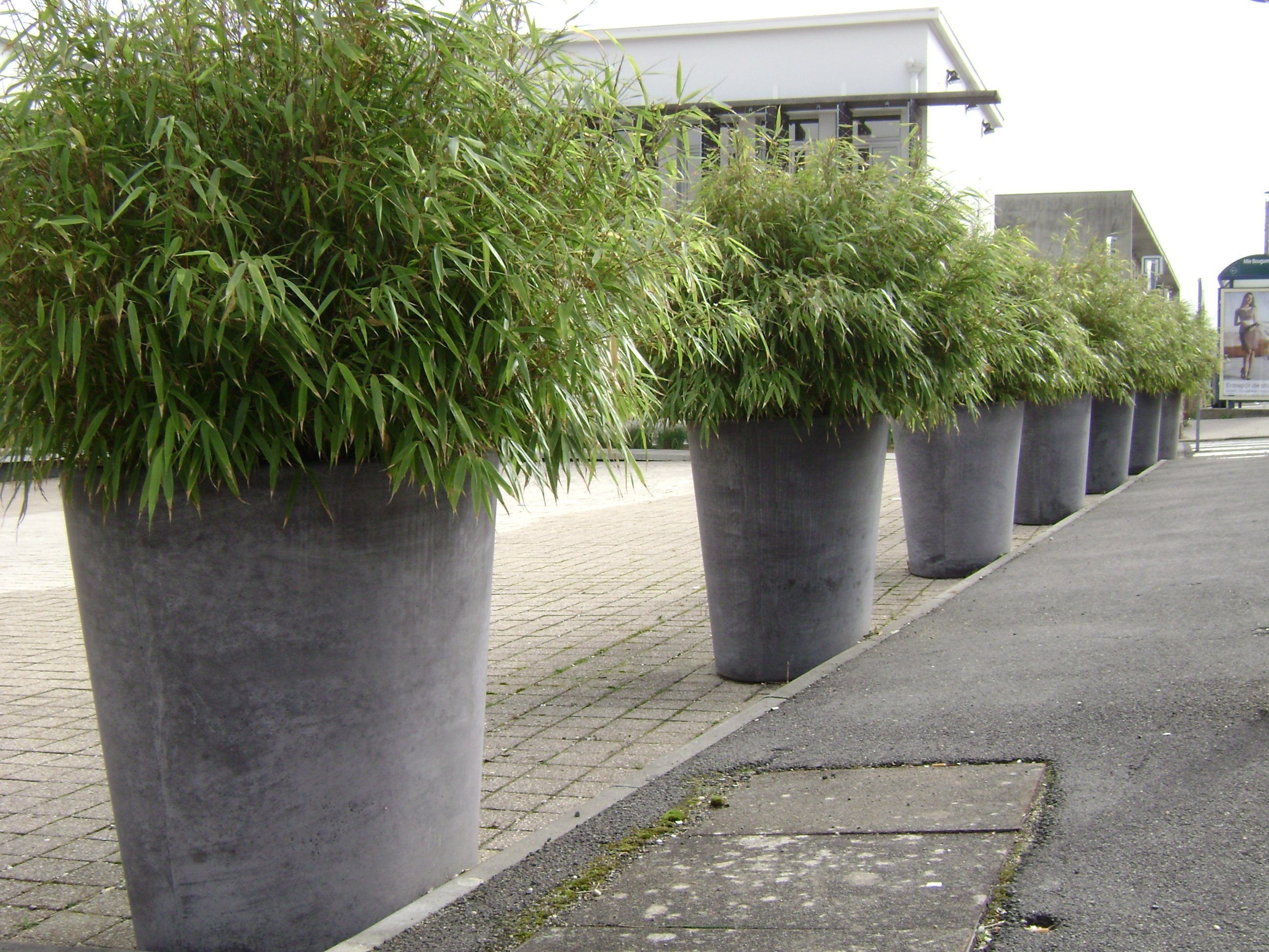 Le style du pot photos at all inclusive plants terrasse et balcon for Phyllostachys aurea en pot